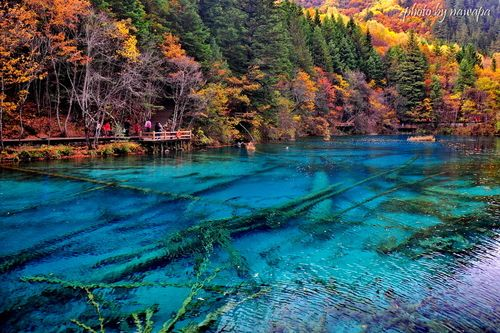 Five-Flower Lake (China) Beautiful Multi-Colored Lake with Fallen Tree Trunks