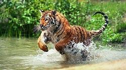 ভারতের জাতীয় পশু